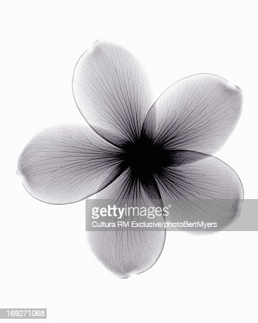 X ray pictures of flowers