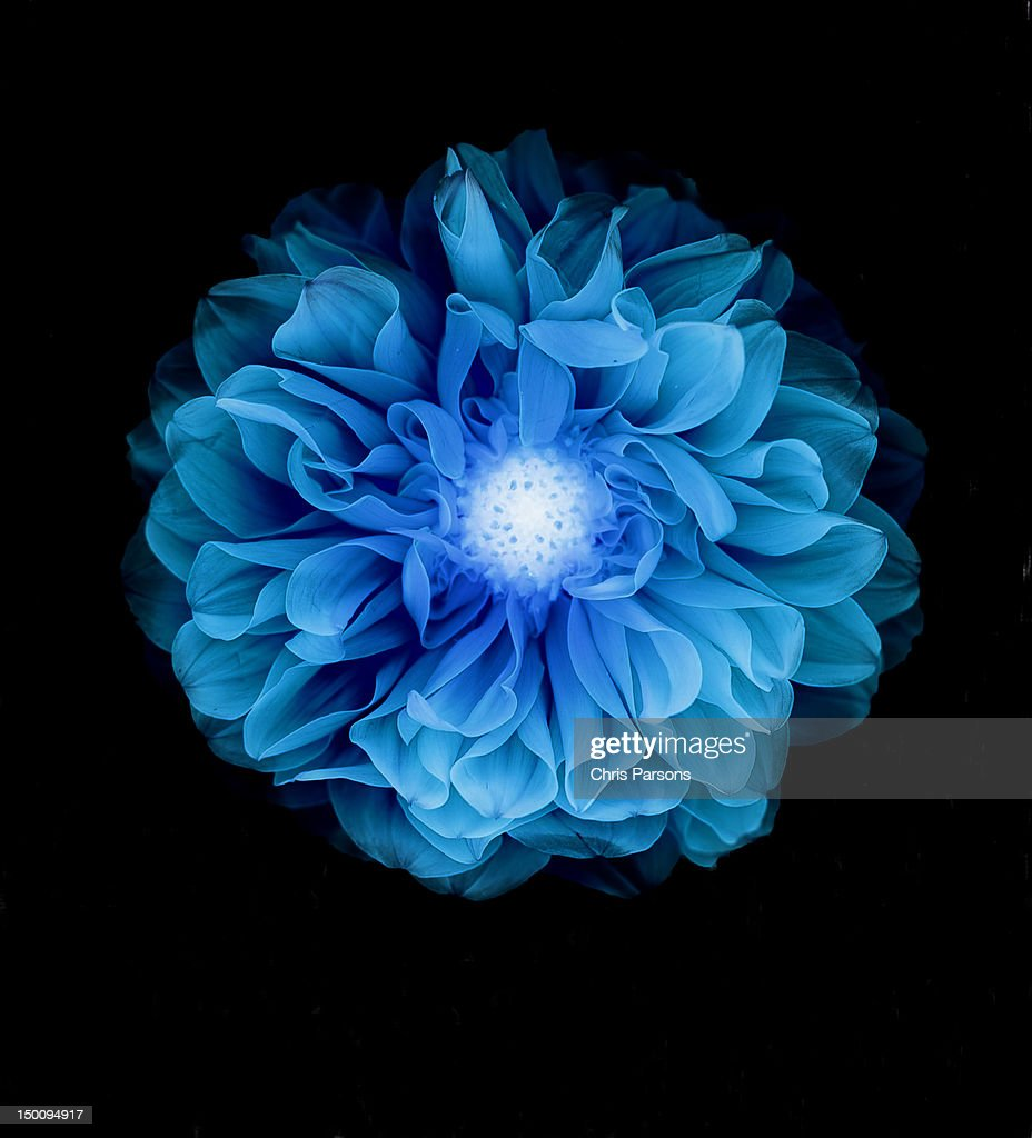 X-ray like image of a flower. : Stock Photo