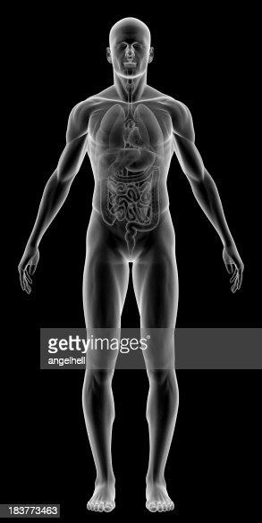 Raios-X do corpo humano com órgãos internos