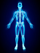 X-ray of skeleton
