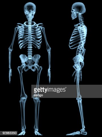 xray skeleton stock photo | getty images, Skeleton