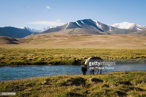 Yack grazing by a river on the Pamir plateau
