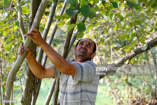 Yamil Memedov grows hazelnuts with a AZ 1000 loan from FINDEV Finance for Development