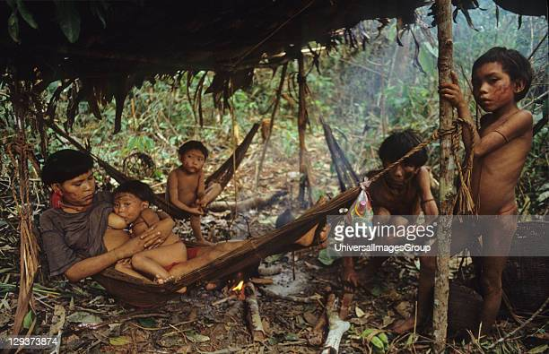 Yanomami Amerindians Venezuelan Amazonas Serra Parima Orinoco River Basin Yanomami village Families live in large communal homesteads Each family has...