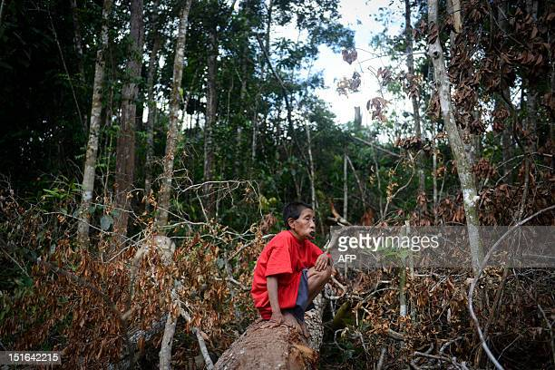 A Yanomami female native rests on a fallen trunk at Irotatheri community in Amazonas state southern Venezuela 19 km away from the border with Brazil...