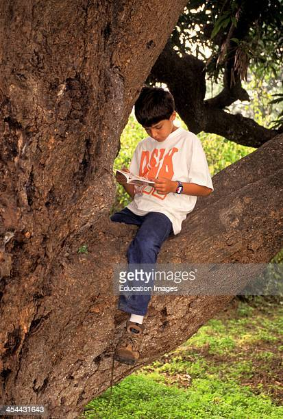 10 Year Old Boy Sitting In Tree Reading