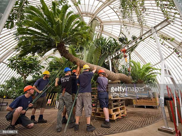 how to get to cycad collection botanic garden