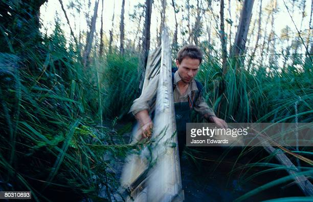A Researcher carries a ladder through a dense lowland swamp forest.