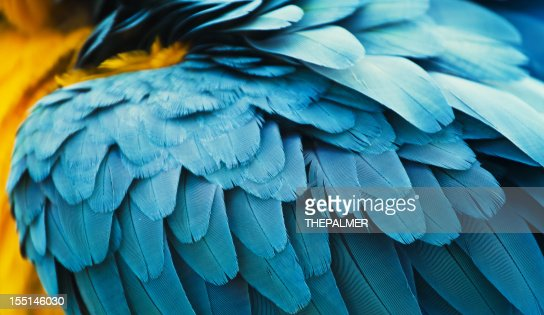 yellow and blue macaw feathers