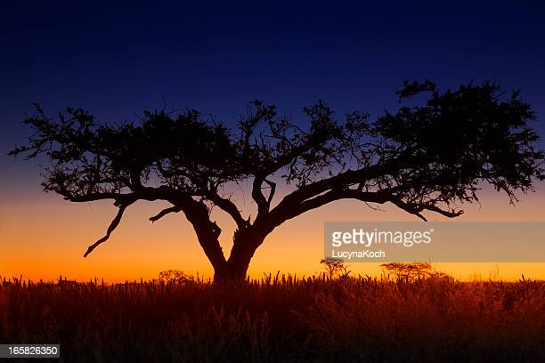 Yellow and blue sunset in Africa