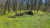 Yellow and green landscape in Bronx park