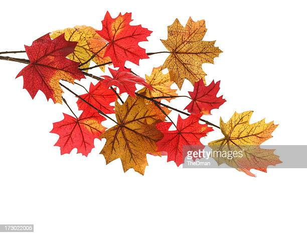 Yellow and red autumn leaves isolated on a white background