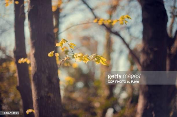 Yellow arm