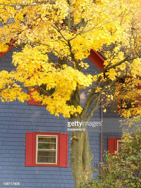 Yellow Autumn Tree Against Purple and Red House