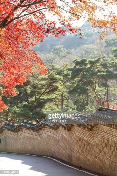 Yellow autumn tree image