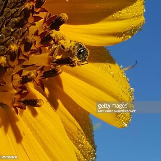 Yellow bee on flower