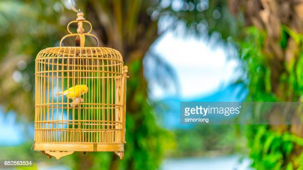 Chant d 39 oiseau photos et images de collection getty images for Cage d oiseau decorative