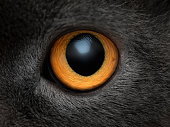 Yellow cat eye close up. Eye macro texture