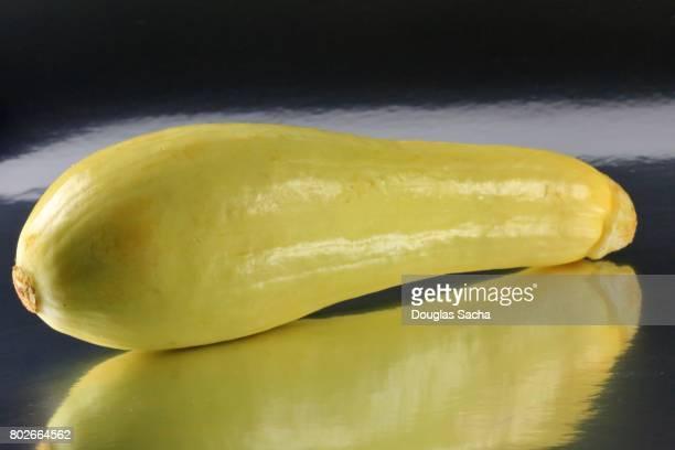 Yellow colored Summer Squash (Cucurbita)