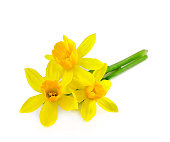 Bunch of yellow daffodils isolated on white background