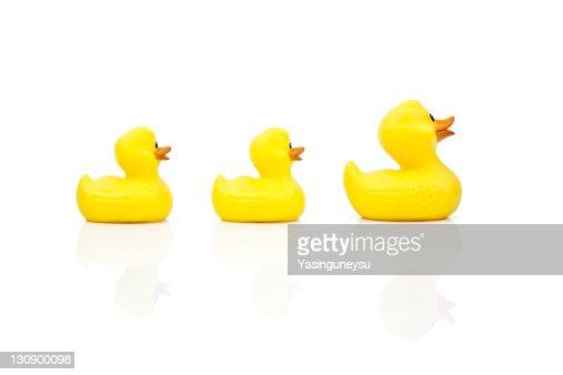 Yellow Ducks in Studio Shot : Stock Photo