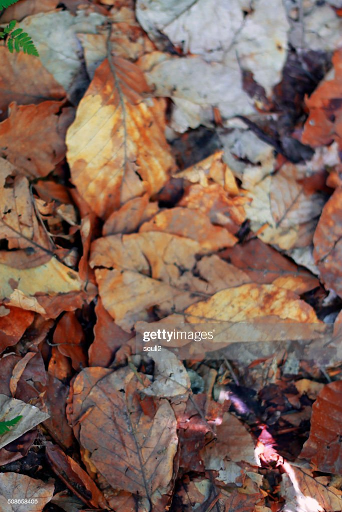 Yellow fallen autumn leaves on the ground : Stock Photo