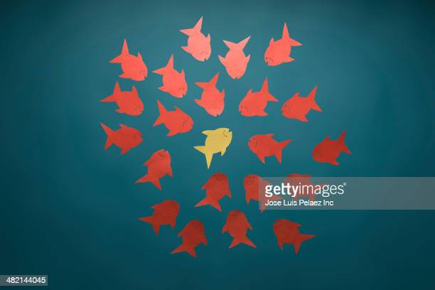 Yellow fish surrounded by red fish