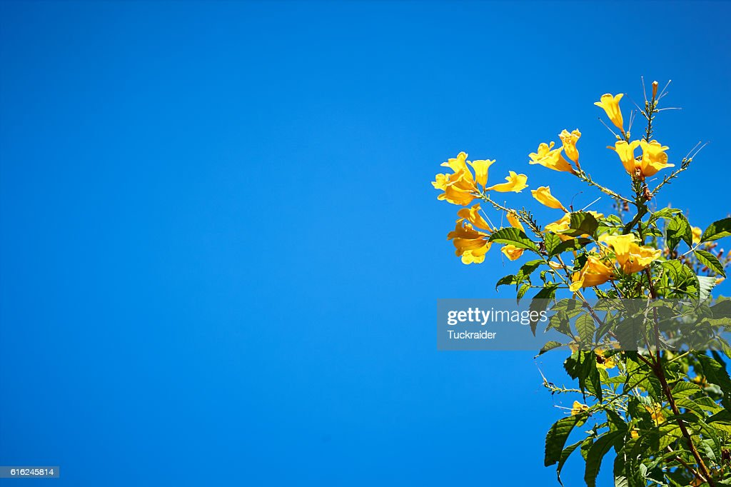 Yellow flower and blue sky : Stock Photo