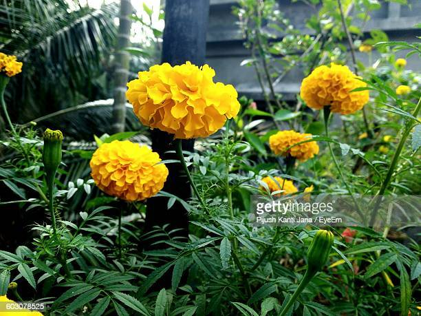 Yellow Flower Blooming Outdoors