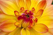 Yellow flower in macro view