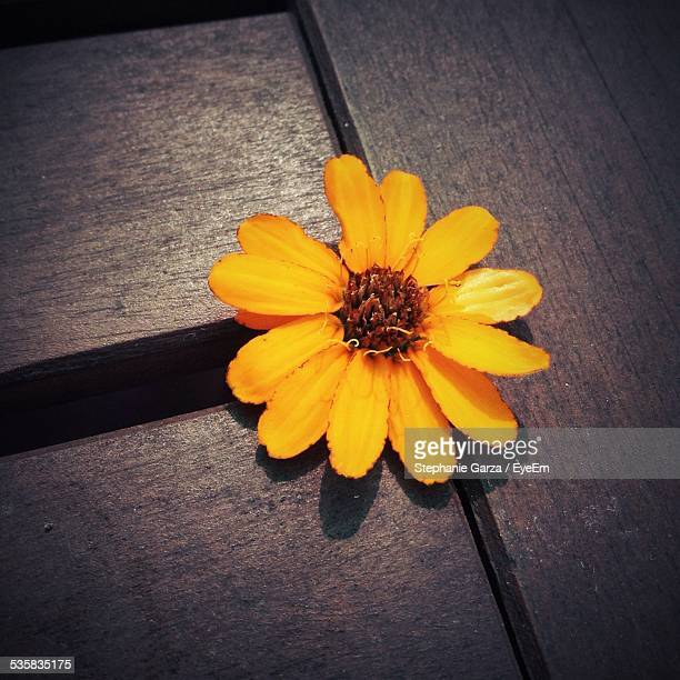 Yellow Flower On Wood
