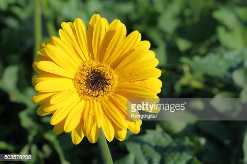 yellow flower : Stockfoto