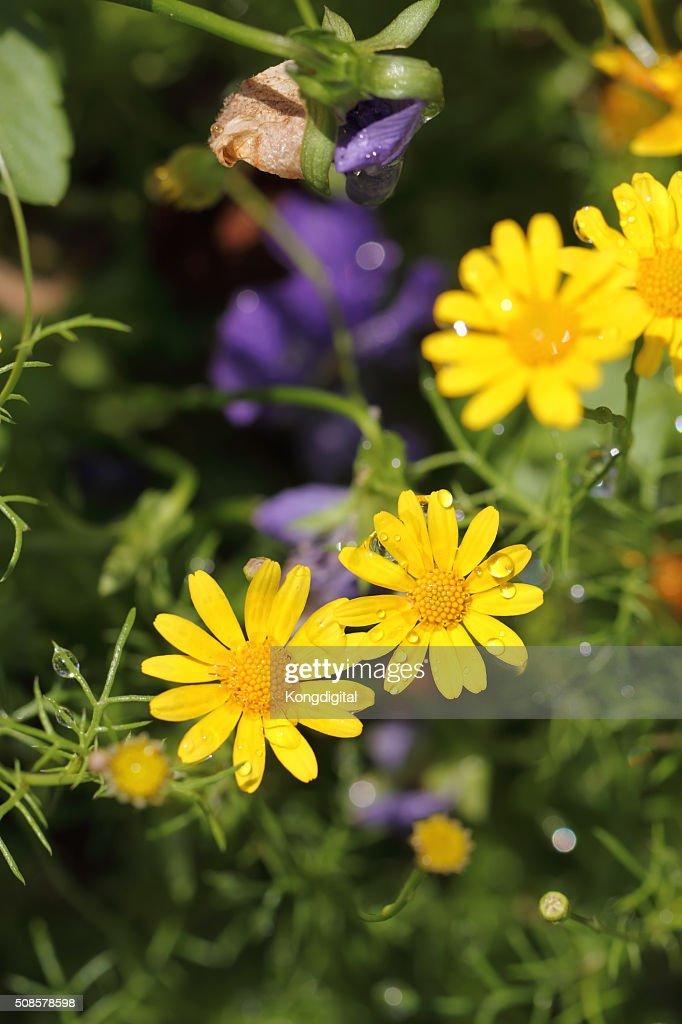 FLEUR jaune : Photo