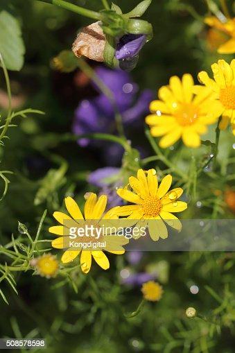 yellow flower : Bildbanksbilder