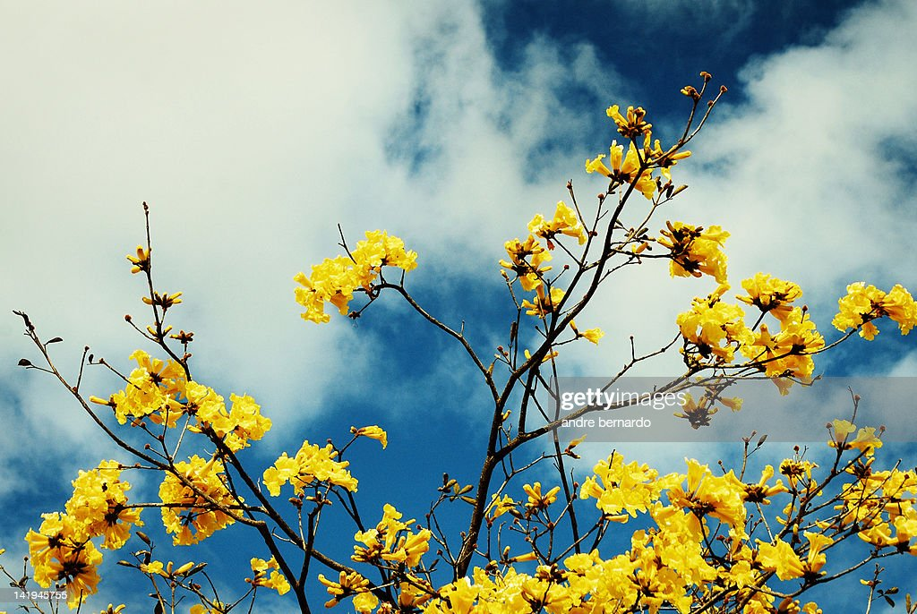 Yellow flowers against blue sky : Stock Photo