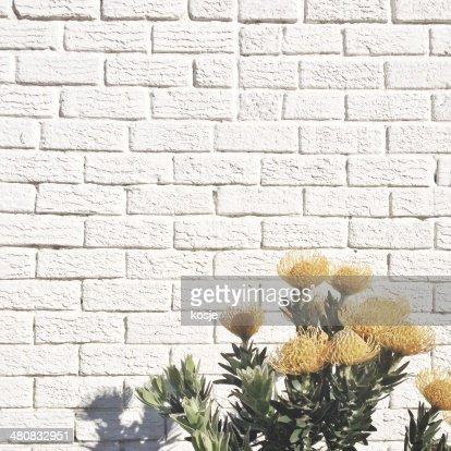 Yellow flowers against white brick wall