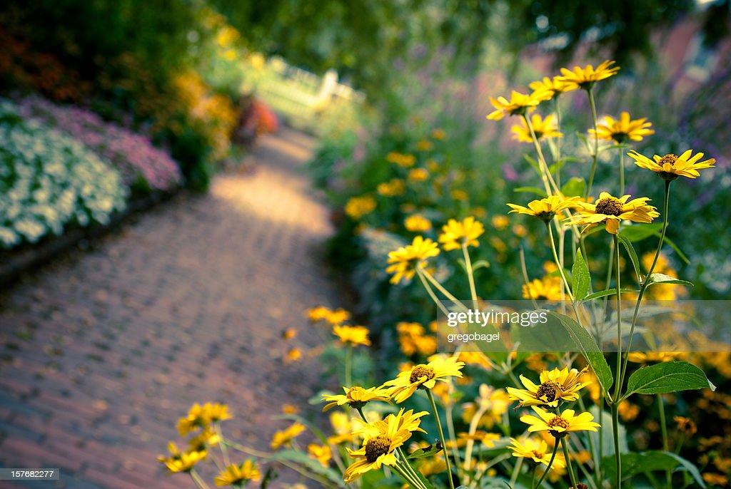 Yellow flowers along brick path in a garden