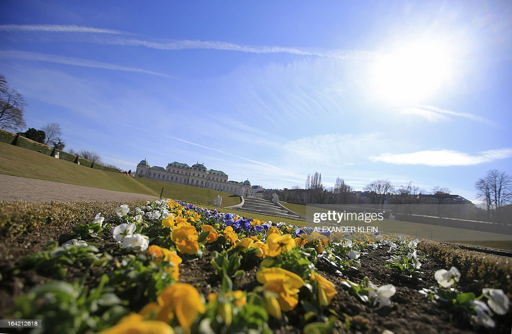 Yellow flowers are seen in the gardens of the Belvedere Palace on a clear day in Vienna on March 20, 2013.