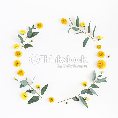 Yellow Flowers Eucalyptus Branches Flat Lay Top View Stock Photo