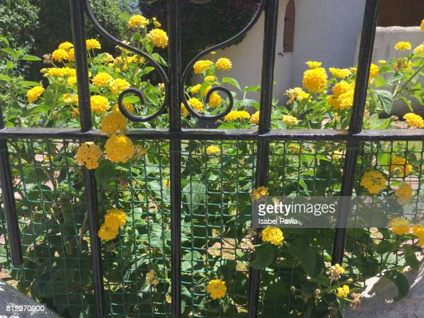 Yellow flowers growing beside a fence.