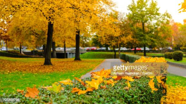 Yellow Flowers Growing In Park During Autumn
