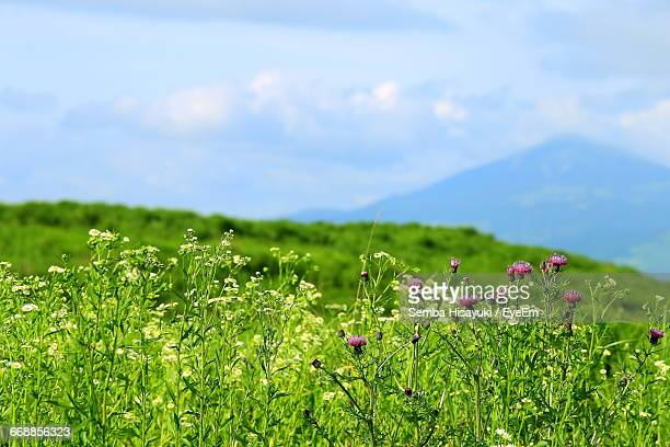 Yellow Flowers Growing On Grassy Field