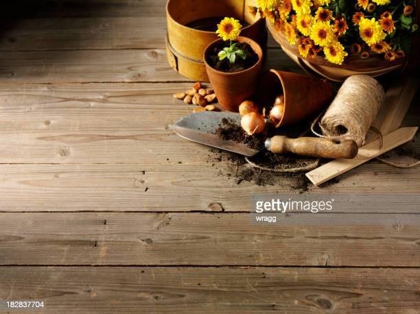 Fleurs jaunes dans un abri de Mettre en pot