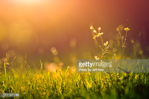 yellow flowers in golden sunlight