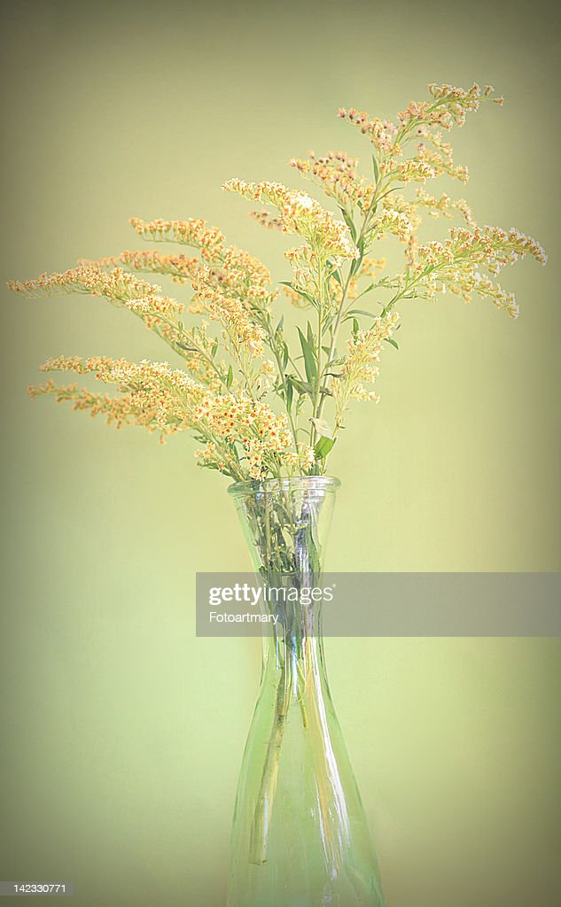 Yellow flowers : Stock Photo