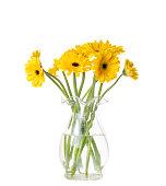 Close up of yellow gerber daisy flower