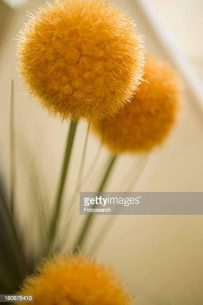 Yellow indoor spherical flower