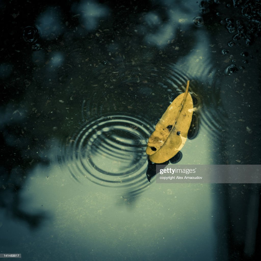 Yellow leaf in rain puddle with ripples : Stock Photo