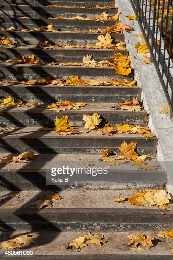 Yellow leaves lying on the stairs : Stock Photo
