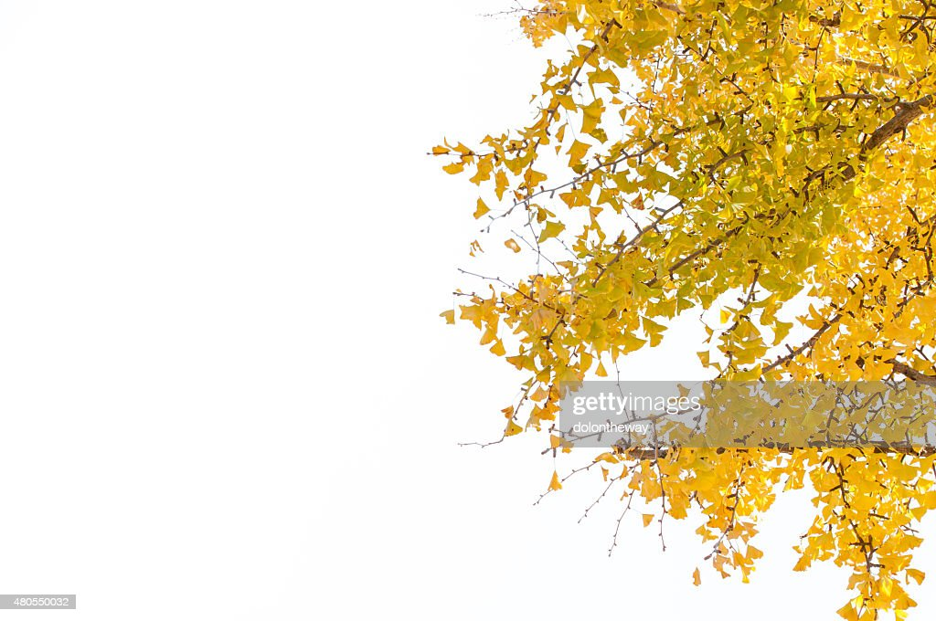 Folhas amarelas : Foto de stock